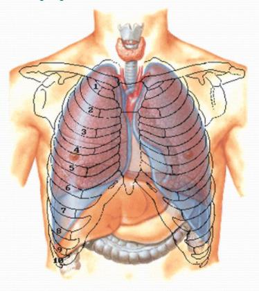 Ostéopathie pour les poumons!